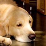 睡眠不足はうつ状態と同じ!? 眠りとメンタルヘルスの関係