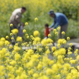 季節ごとに別の花粉症があるんです。対策は1年中必要かも?
