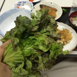 左手に生野菜
